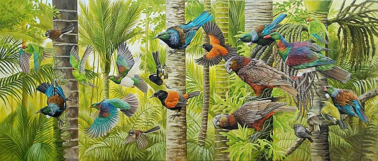 craig platt nz native bird artist, oil paintings