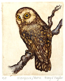 mary taylor nz etchings, morepork, nz owl