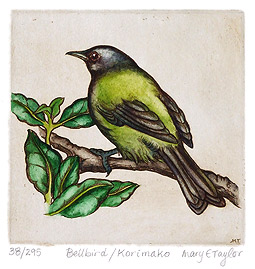 mary taylor nz native birds etchings, bellbird