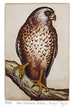 mary taylor nz native bird etchings