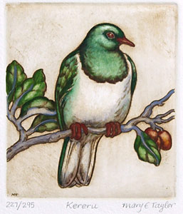 mary taylor nz woodpigeon fine art print