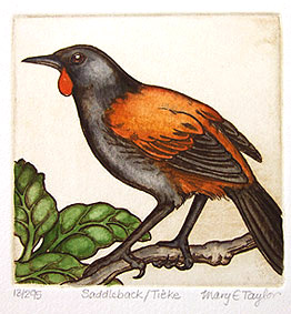 mary taylor nz bird etchings