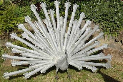 corrugated iron metal peacock
